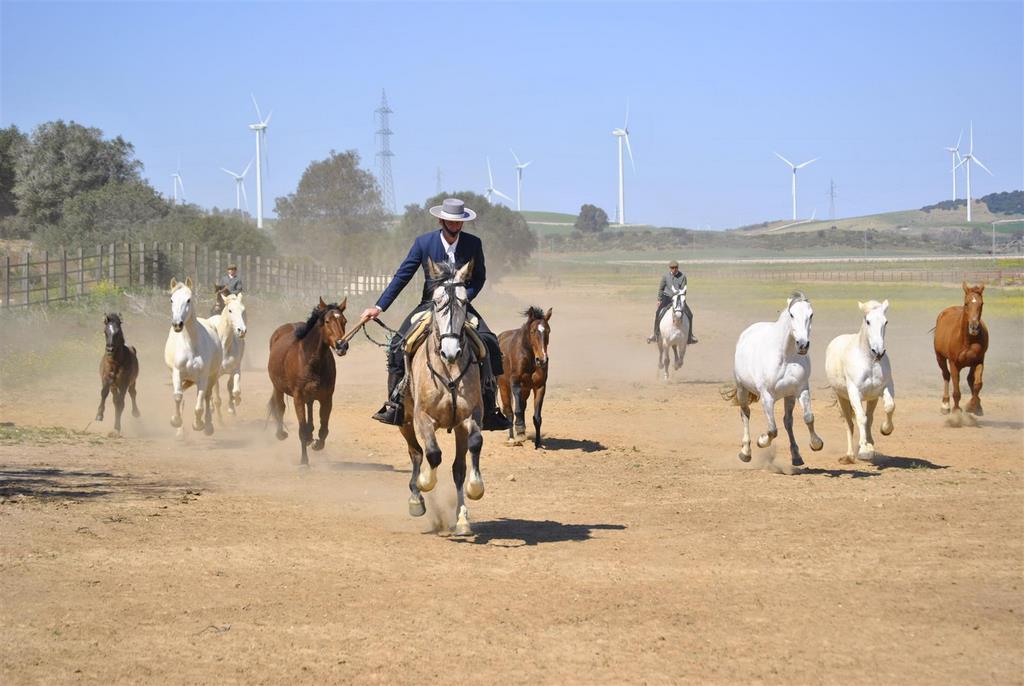 A campo Abierto