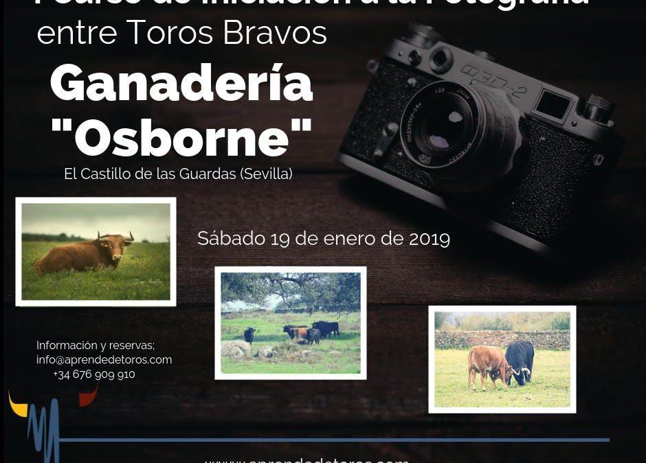 Aprende de Toros: I Curso de Iniciación a la Fotografía entre Toros Bravos