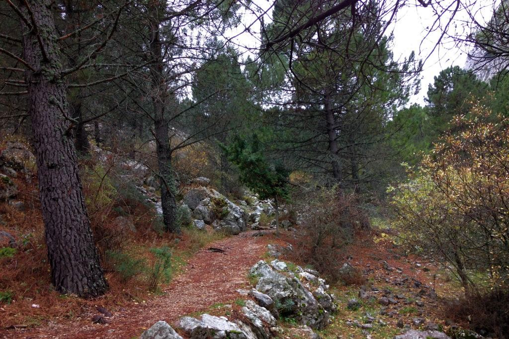 Sendero Llanos del Endrinal Sierras de la provincia de Cádiz